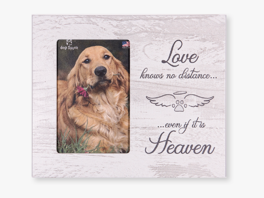 """Love Knows No Distance""""  Class= - Golden Retriever, HD Png Download, Free Download"""