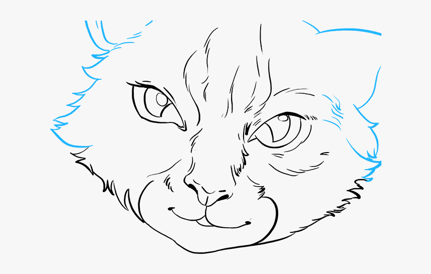 How To Draw Cat Eyes Realistic Cat Face Icon Hd Png Download
