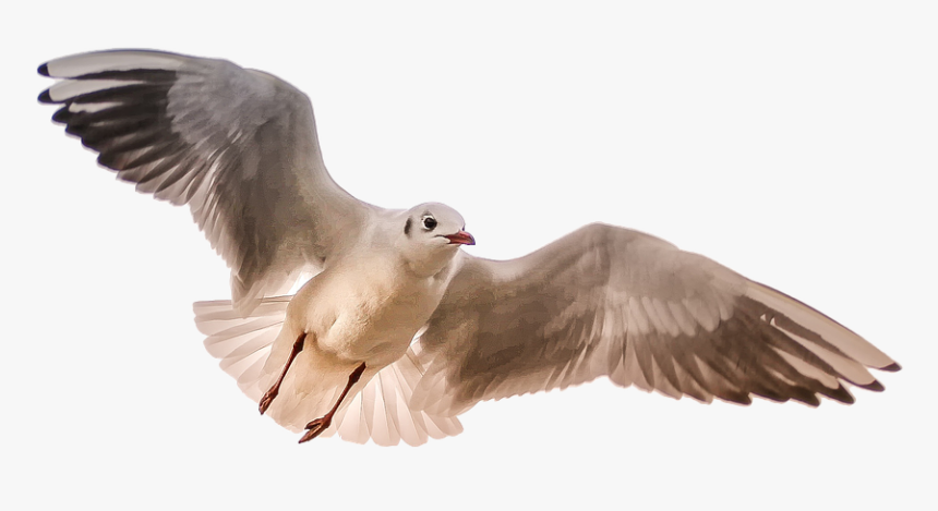 Gull, Sea, Bird, Wing - Birds Flying Towards You, HD Png Download, Free Download