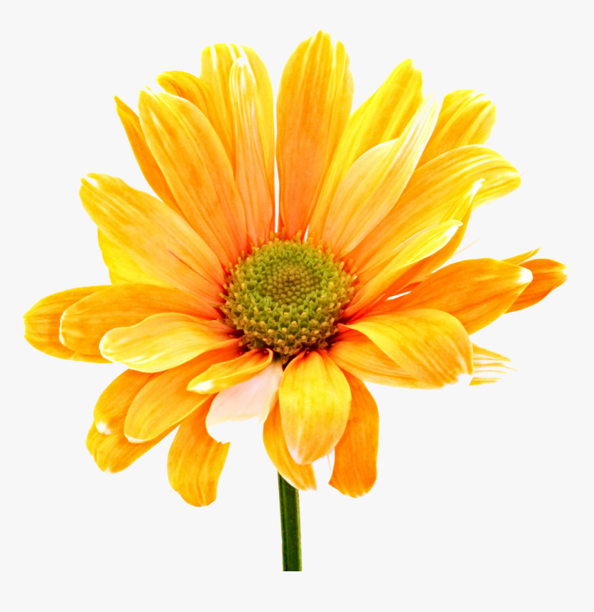 Colorful Flowers Png Photos - Png Format Latest Flower Png, Transparent Png, Free Download