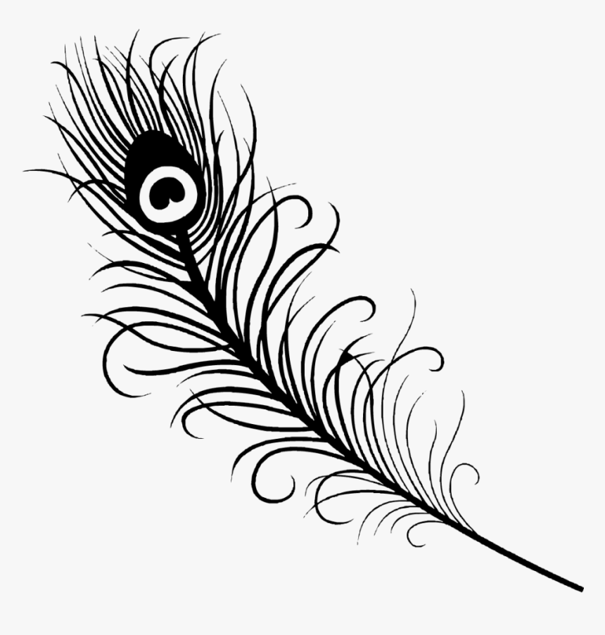 Successful Peacock Feather Coloring Page Books - Simple Peacock Feather Drawing, HD Png Download, Free Download