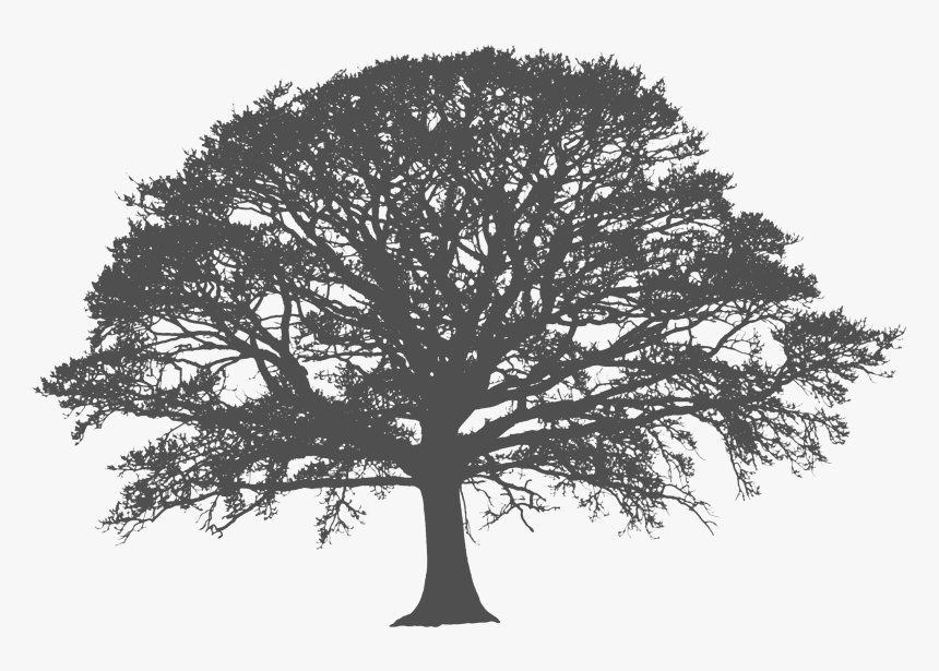 Transparent White Tree Png, Png Download, Free Download