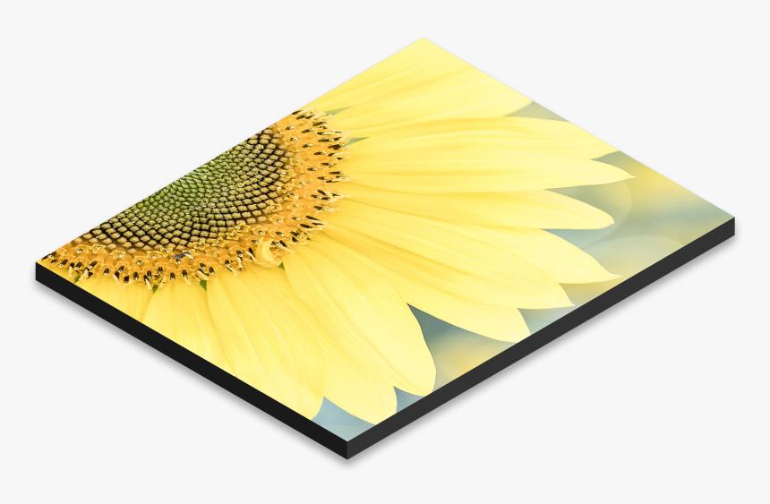 Floral Design, HD Png Download, Free Download