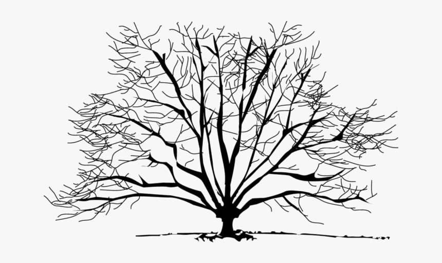 Bare Tree Png Transparent Images Winter Trees Clipart Png Download Kindpng