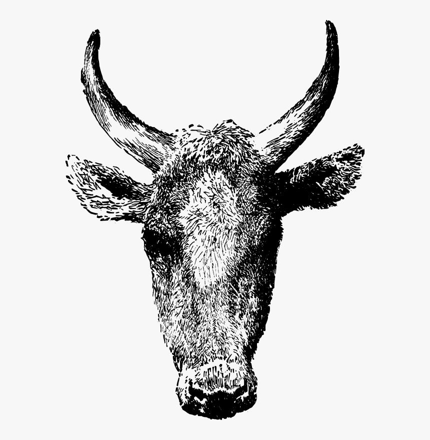Cow Head - Gambar Kepala Anoa Png, Transparent Png, Free Download