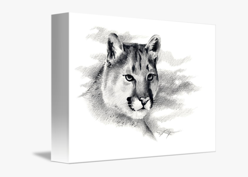 By David Rogers - Mountain Lion Drawing, HD Png Download, Free Download
