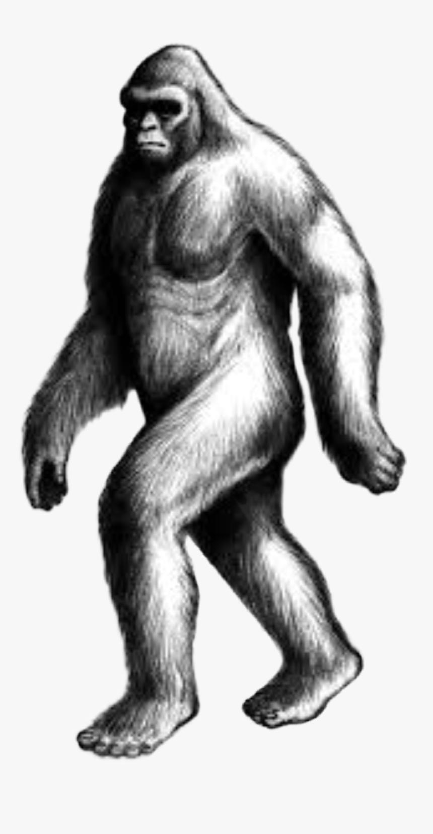 handdrawn #sasquatch #bigfoot #yowie #yeti #cryptid - Draw Sasquatch, HD Png Download - kindpng