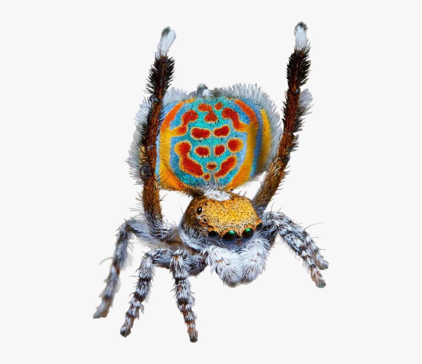 Transparent Giant Spider Png - Questacon Spider, Png Download, Free Download