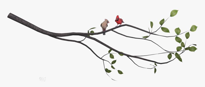 Cardinal clipart svg, Cardinal svg Transparent FREE for download on  WebStockReview 2020