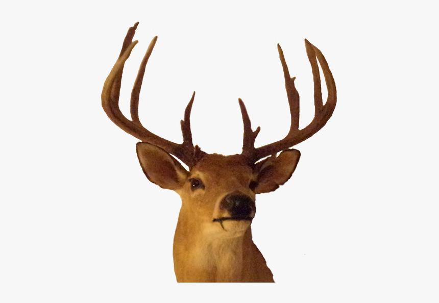 Elk Antler Trophy Hunting - Big Buck Png, Transparent Png, Free Download
