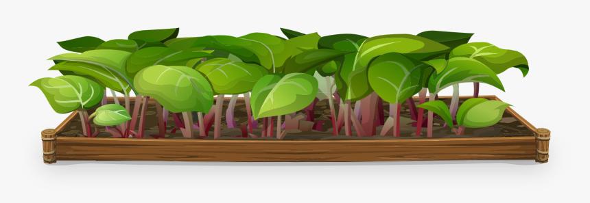 Nursery Plants Png, Transparent Png, Free Download