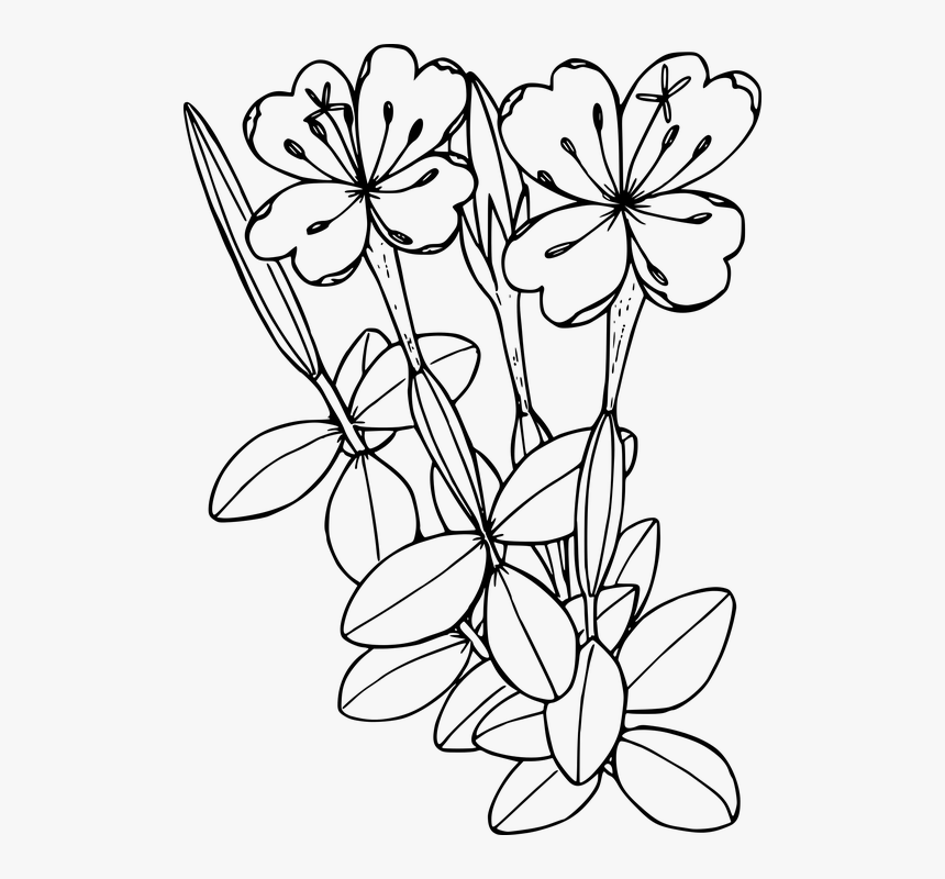 Flower, Plant, Wild, Wildflower - Fireweed Clipart, HD Png Download, Free Download