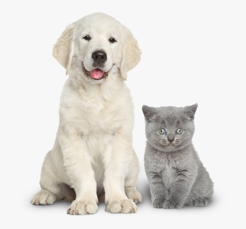 Dog And Cat Together, HD Png Download, Free Download
