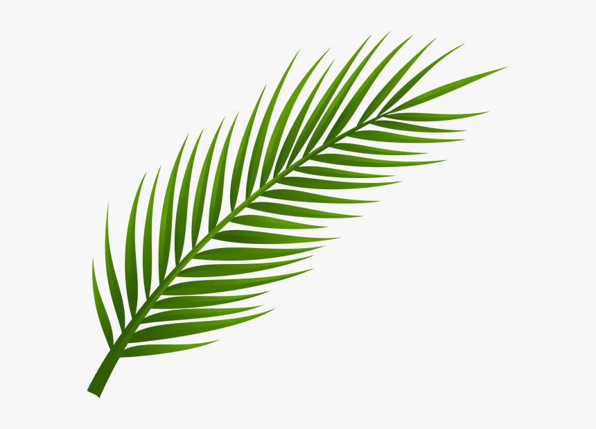 Palm Tree Clip Art Palm Tree Drawing Leaf Drawing Transparent Background Palm Leaf Png Png Download Kindpng