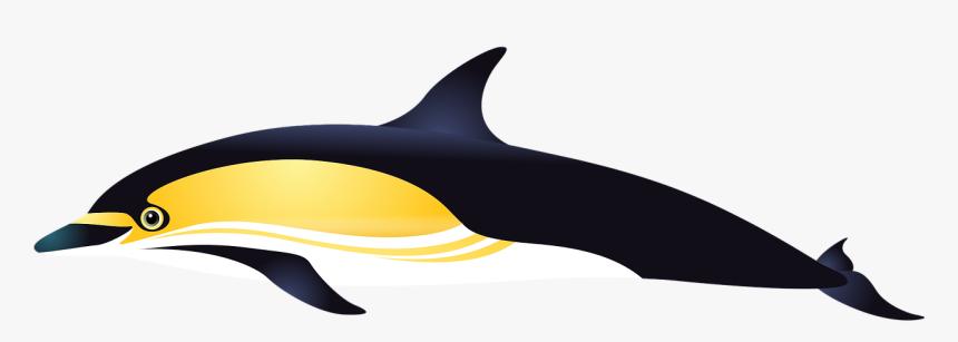 Dolphin, Sea, Fish, Aquarium, Tropical Fish, Fishes - Delfin Peces Del Mar Png, Transparent Png, Free Download