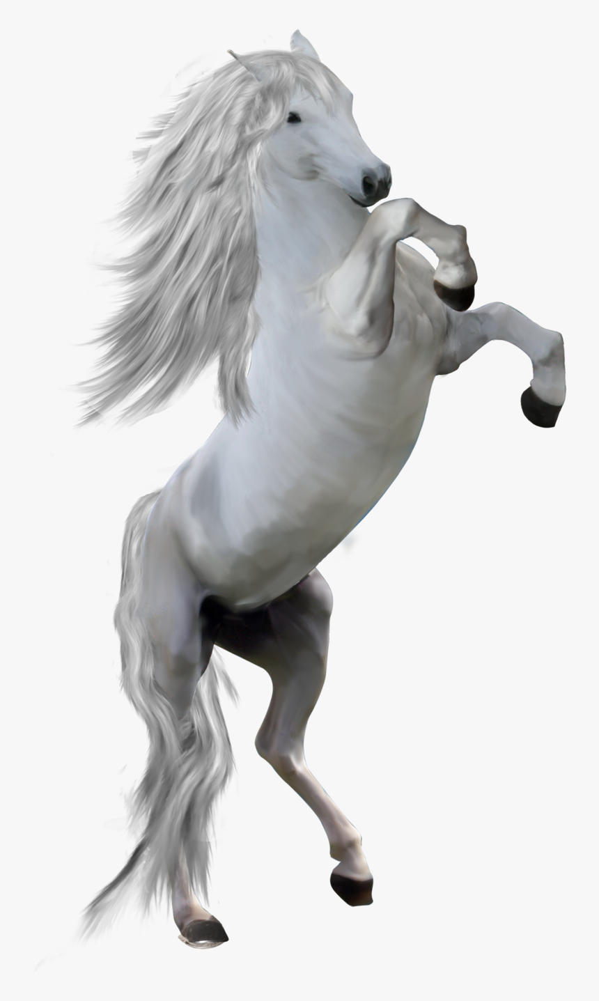 White Horse Png Png Transparent White Horse Png Png Download Kindpng