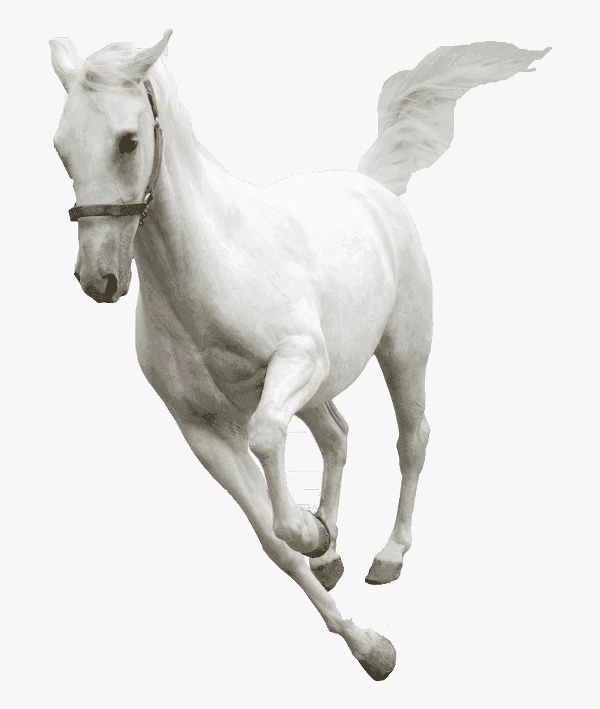White Horse Transparent Background Horse Png Transparent, Png Download, Free Download