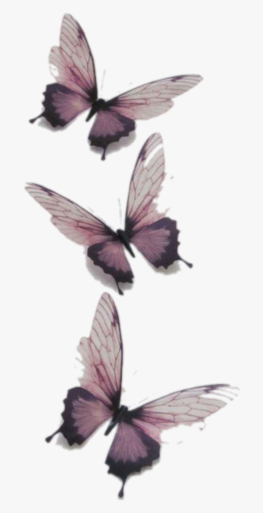 Butterfly Butterflies Vintage Transparent Tumblr Png Transparent Butterfly Png Download Kindpng