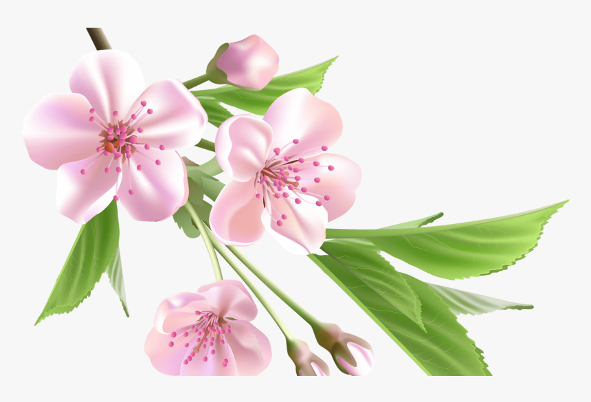 Sakura Flower Drawing Clip Art Library - Spring Flowers Png, Transparent Png, Free Download