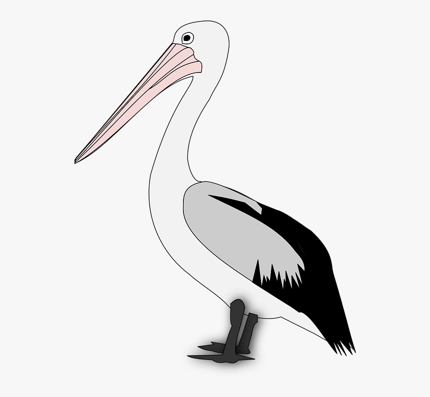 Pelican Stock Illustrations. 2,050 Pelican clip art images and royalty free  illustrations available to search from thousands of EPS vector clipart and  stock art producers.