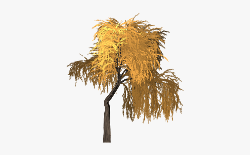 Willow, Tree, Orange, Yellow, Summer, Outdoor, Nature - Portable Network Graphics, HD Png Download, Free Download