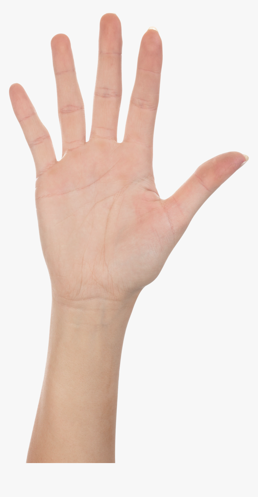 High Five Hand Png, Transparent Png, Free Download