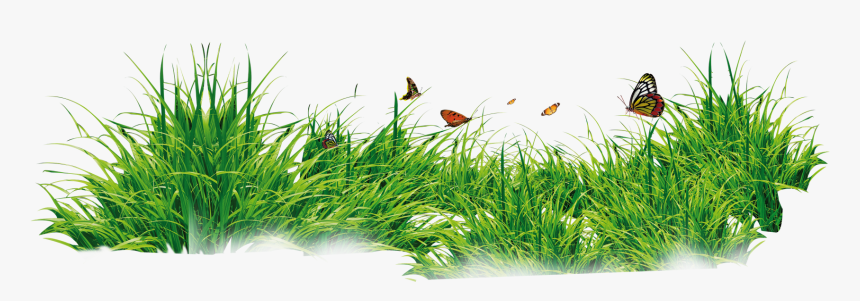 Grass With Flower Background Png Download - Grass Png, Transparent Png, Free Download