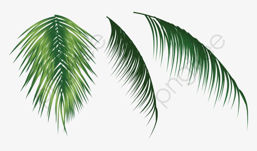Coconut Leaves Clipart - Coconut Tree Leaf Png, Transparent Png, Free Download