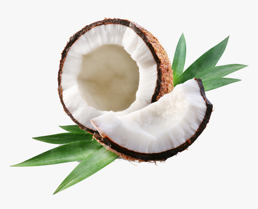 Coconut1 - Open Coconut, HD Png Download, Free Download
