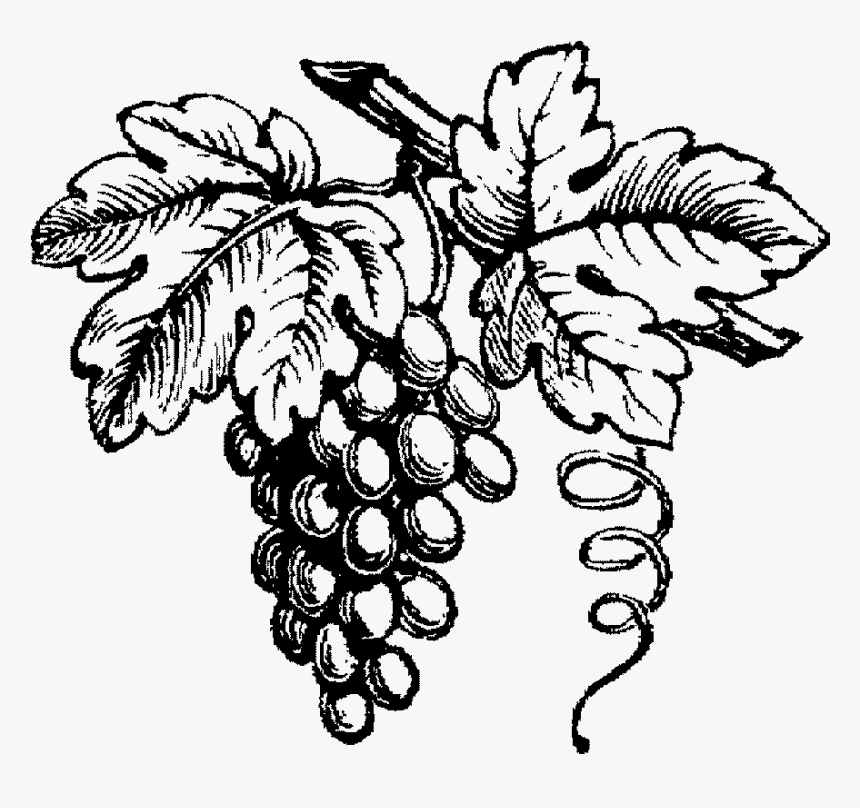 Grape Drawing Wine Black And White Wine Grapes Hd Png Download Kindpng