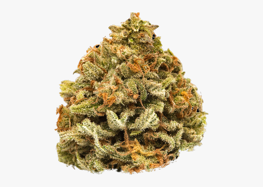 Hemp Cannabis Flower Nugs - Christmas Tree, HD Png Download, Free Download