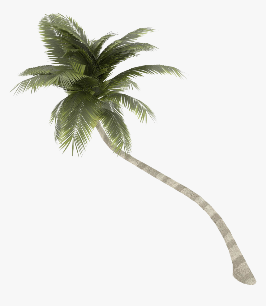 Coconut Tree Png Palm Free Download - Coconut Tree 3d Model, Transparent Png, Free Download