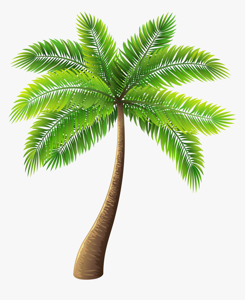 Palm Tree Png Clip Art - Transparent Palm Tree Png, Png Download, Free Download