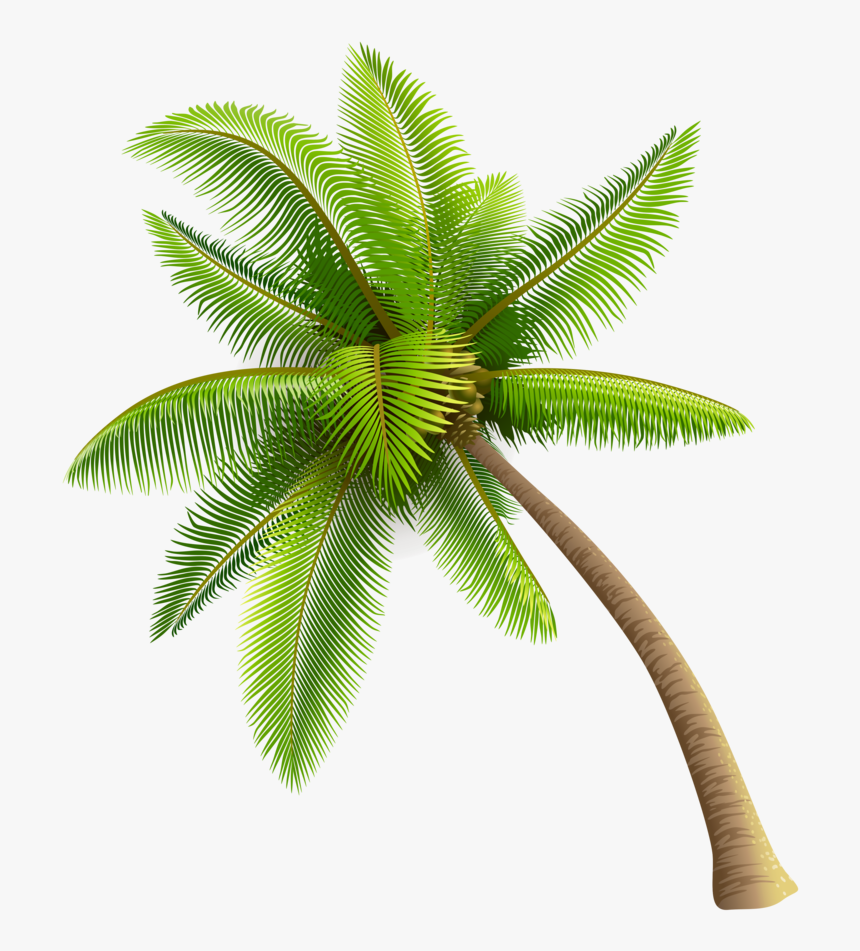 Coconut Tree Png Transparent Image - Coconut Tree Vector Png, Png Download, Free Download