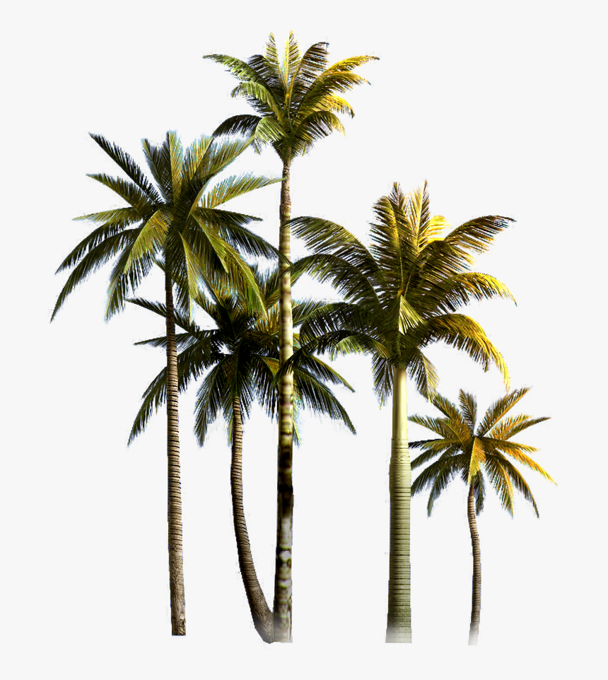 Coconut Grove Tree Euclidean Vector Palm Asian Clipart - Coconut Trees Png Format, Transparent Png, Free Download