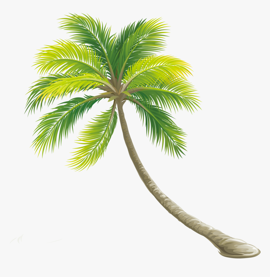Tree Color Shrub - Transparent Background Palm Tree Png, Png Download, Free Download
