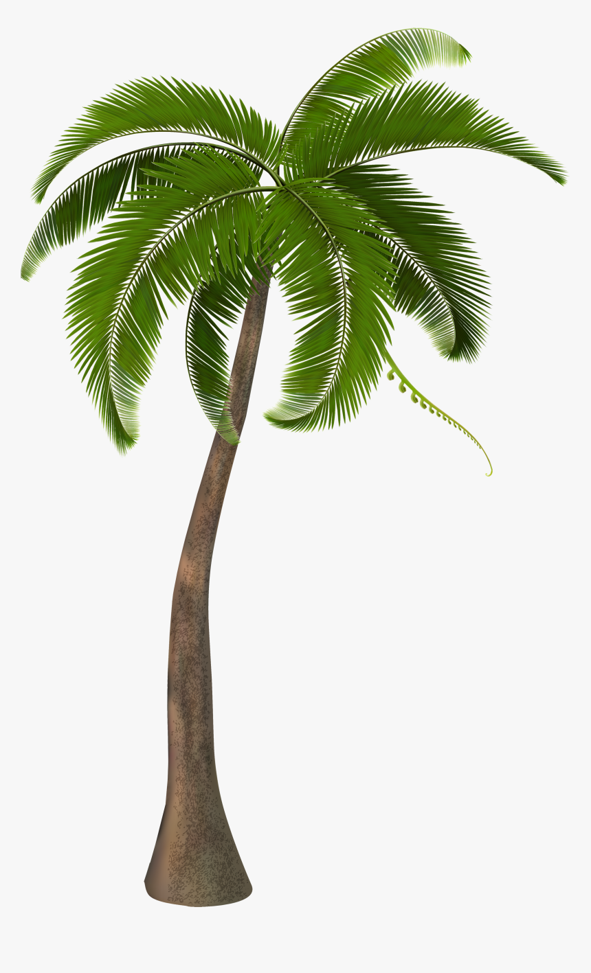 Beautiful Arecaceae Palm Tree Free Frame Clipart - Coconut Palm Tree Png, Transparent Png, Free Download