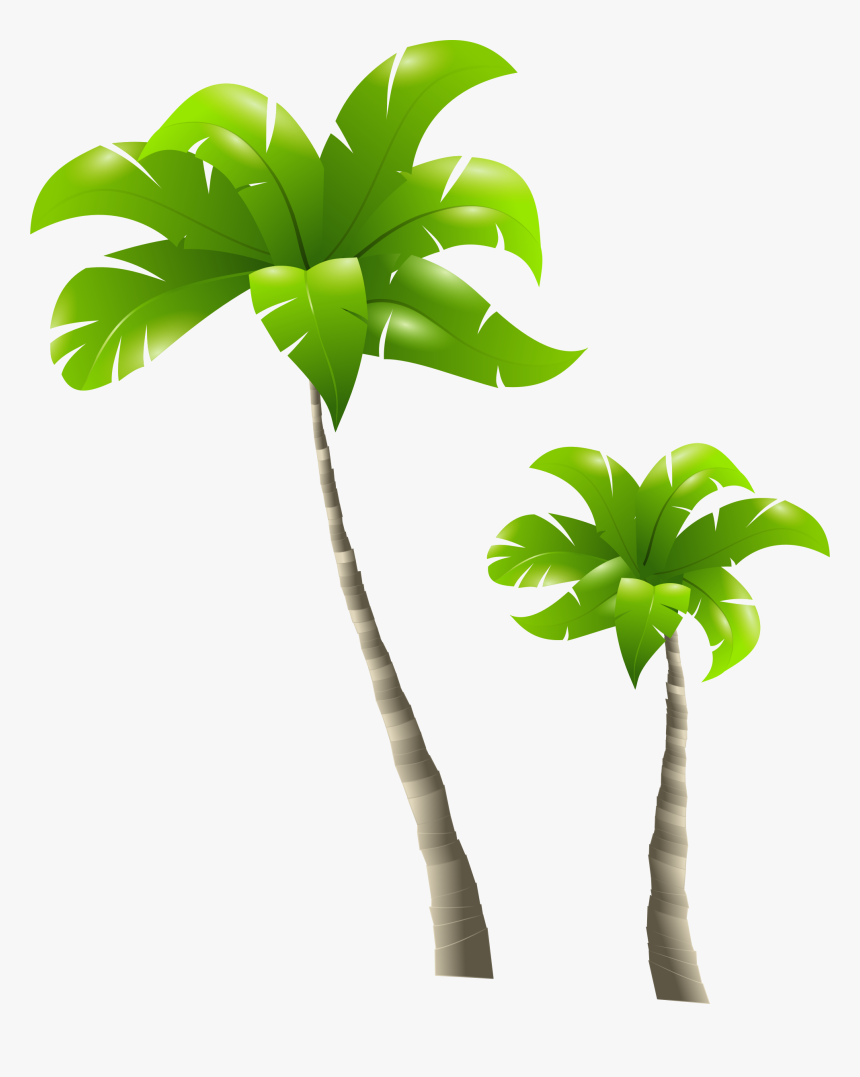 Palm Tree Png Clipart - Tall Tree And Short Tree, Transparent Png, Free Download