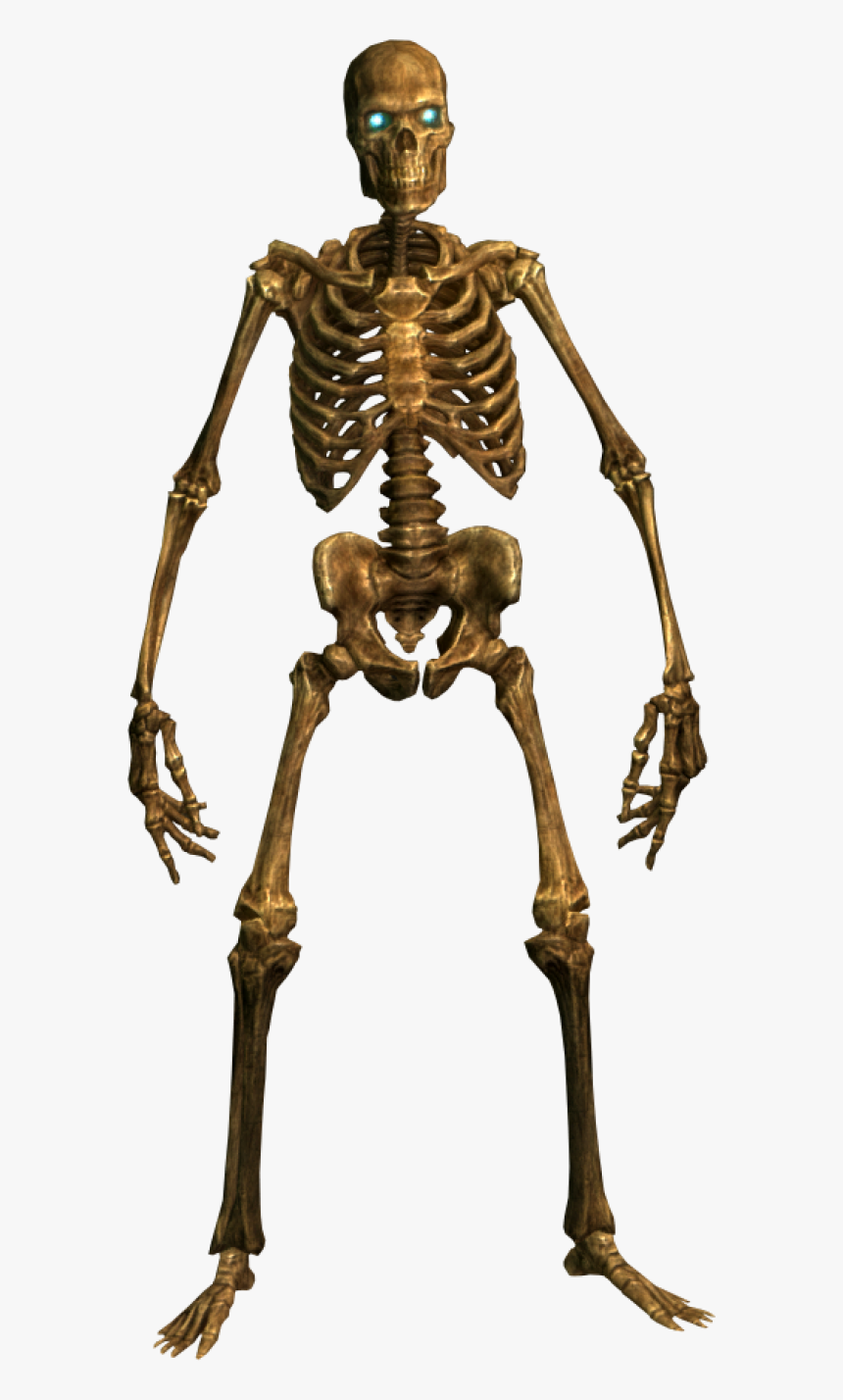 Skeleton Human Png Png Images - Skeleton Png, Transparent Png, Free Download