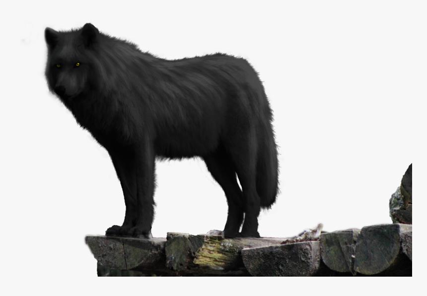 Black Wolf On Rock Png - Black Wolf On Rock, Transparent Png, Free Download