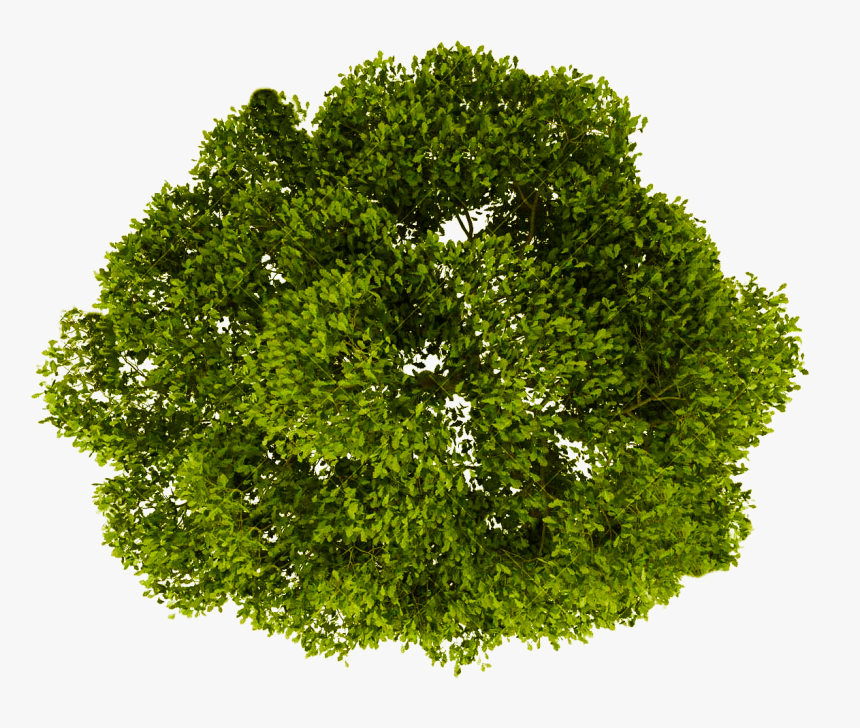 Transparent Grass Background Png - Trees Top View Png, Png Download, Free Download