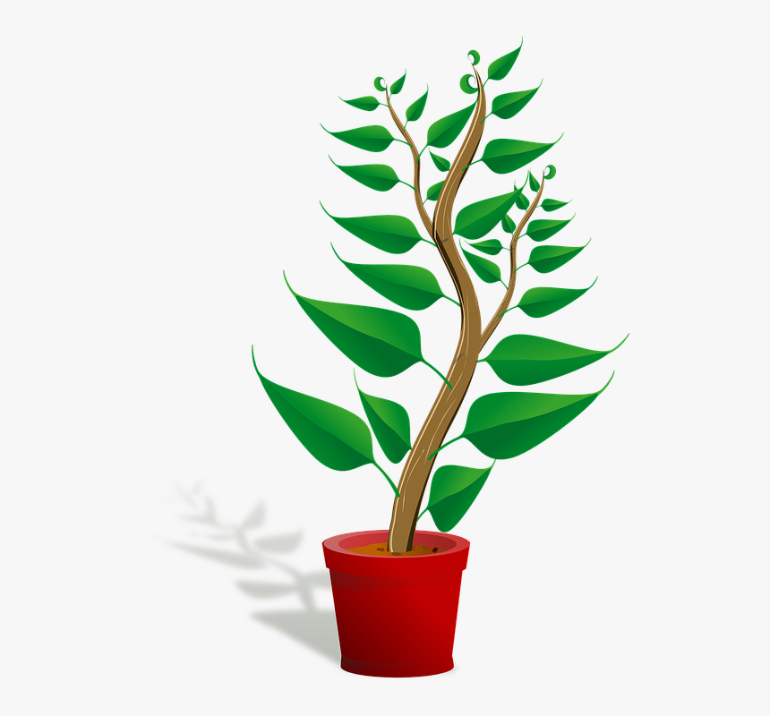 Seedling, Potted Plant, Sapling, Plant, Growing, Growth - Getting To Know Plants, HD Png Download, Free Download