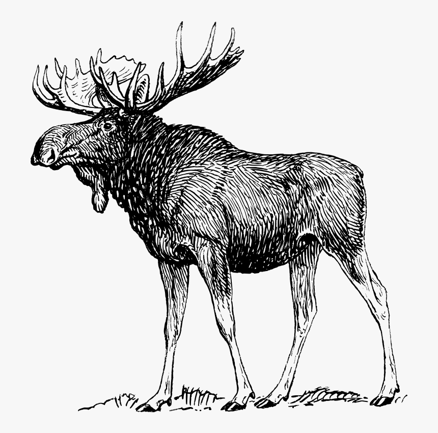 Free Vector Moose - Moose Black And White, HD Png Download, Free Download