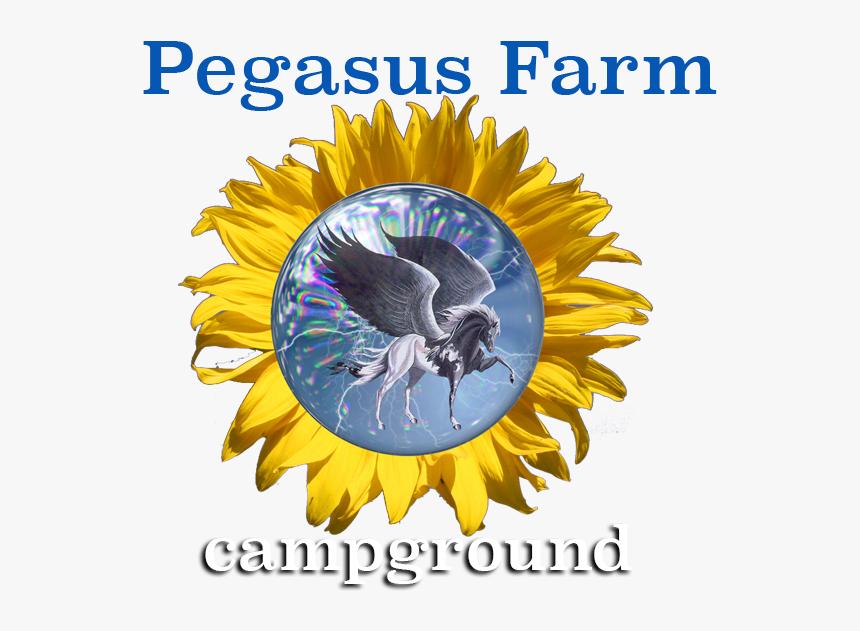 Pegasus Farm Campground, HD Png Download, Free Download