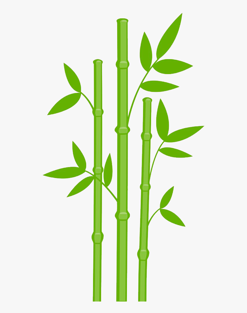 Bamboo Drawing Leaves Bamboo Clipart Hd Png Download Kindpng