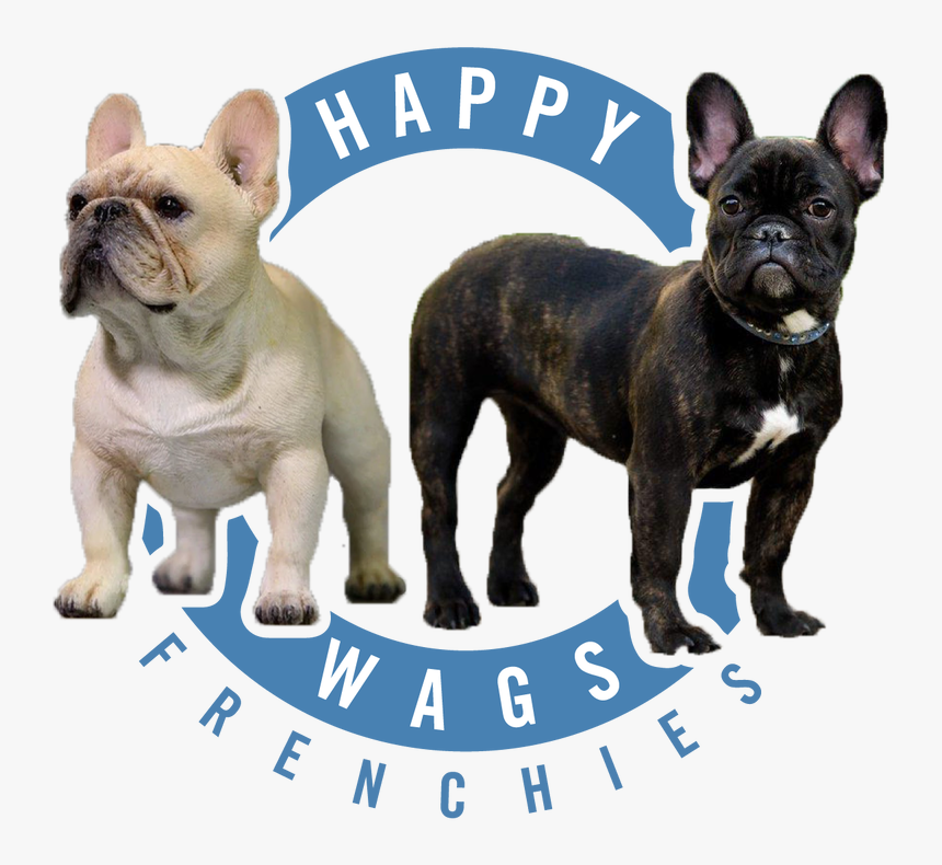 French Bulldog, HD Png Download, Free Download