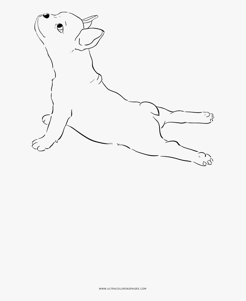 - French Bulldog Coloring Page - Line Art, HD Png Download - Kindpng