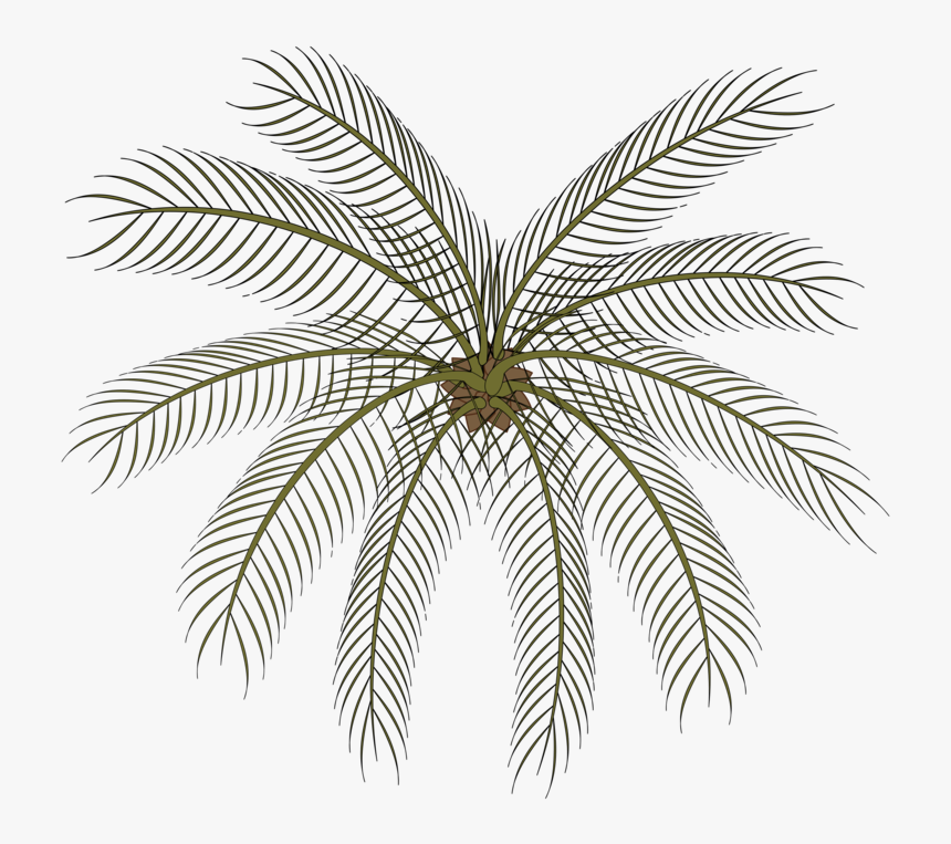Plant,leaf,symmetry - Palm Small Top View Png, Transparent Png, Free Download