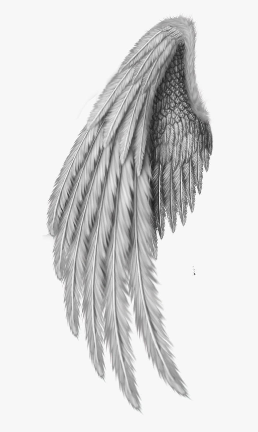Drawing Clip Art Realistic Angel Wings Drawing Hd Png Download Kindpng