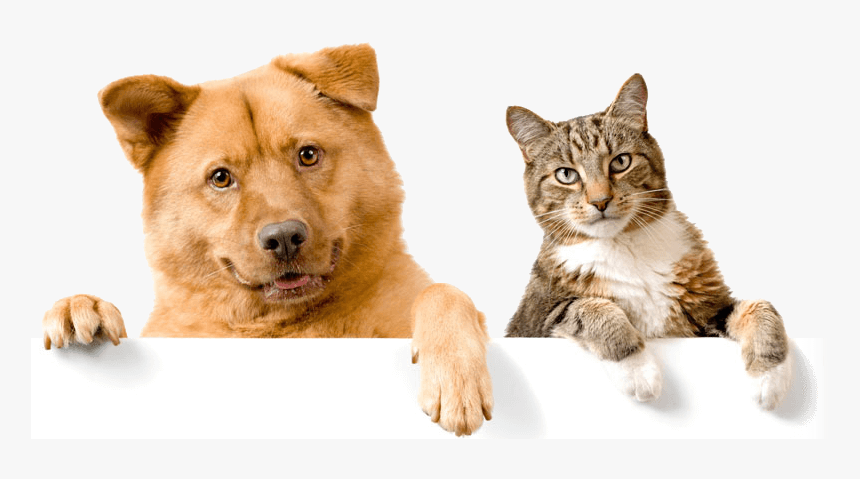 Healthy-pets - Domestic Cats And Dogs, HD Png Download, Free Download